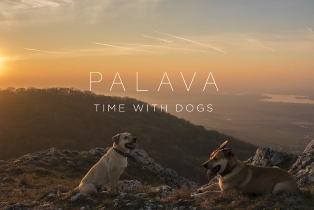 Pálava | Time with dogs